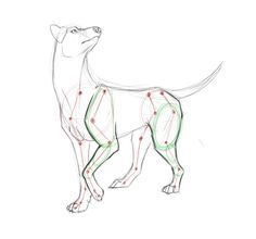 Canine anatomy by Kibah on deviantART                                                                                                                                                                                 More
