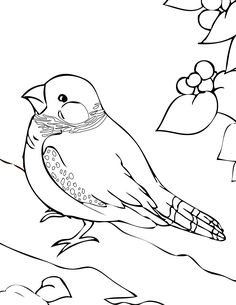 Dailycoloringpages Images Texas Pine Warbler Bird