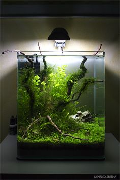 126 best nature aquascaping style tag images in 2019