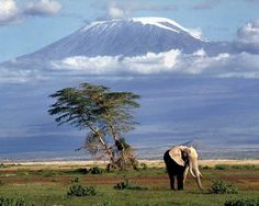 Africa - looks like Tanzania with Mt. Kilimanjaro in the background