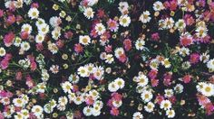 Imagen de flowers, nature, and wallpaper Vintage Desktop Wallpapers, Aesthetic Desktop Wallpaper, Mac Wallpaper, Macbook Wallpaper, Wallpaper Iphone Disney, Aesthetic Backgrounds, Computer Wallpaper, Cute Wallpapers, Wallpaper Backgrounds