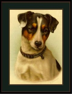 English Print Jack Russell Terrier Dog Art Picture | eBay