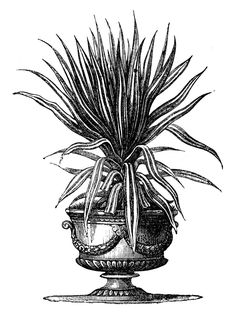 Victorian Garden Graphics - Potted Plants in Urns - The Graphics Fairy