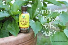 Yerba mate is more popular than coffee in South America and fast becoming the preferred drink elsewhere but is healthy or unhealthy to consume regularly? The answer may surprise you!  http://www.thehealthyhomeeconomist.com/yerba-mate-healthy-or-unhealthy/