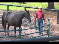 Teach Your Horse to Spin at Liberty with Pat Parelli - YouTube