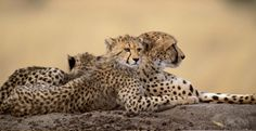 Tips for an 'epic' Southern African odyssey - Africa Geographic Blog