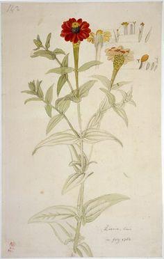 Botanical art - YooniqImages_102273289.jpg (297×469)