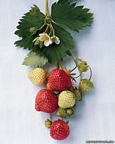 Tips for Buying and Storing Summer Fruit - Martha Stewart Food