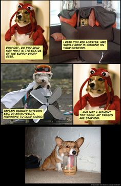 627 Best Dog 4furry Brothers Images Fanny Pics Funny