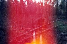 Woods can be red. By Simon Marsham.