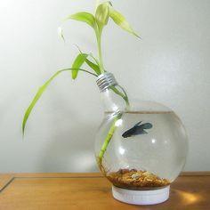Repurposing a large light bulb into a beta fish aquarium