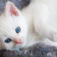 #dogalize Sei pronto ad adottare un gatto? Cosa c'è da sapere #dogs #cats #pets