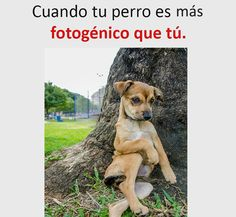 the best memes to laugh, and look like a late seal 😆😆😂😂… everything # Of Everything # amreading # books # wattpad diy funny tattoo bonitos cachorros graciosos Funny Spanish Memes, Spanish Humor, Dog Memes, Funny Memes, Hilarious, Animal Jokes, Funny Animals, Mexican Memes, Wattpad