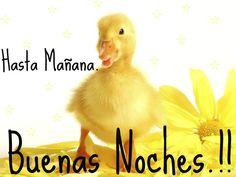 Hasta Mañana: Buenas Noches...!!