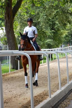 a shady hacking lane runs along the road through greenwich park, adjacent to the stable area. riders walked and trotted up the hill. photo by jennifer bryant.