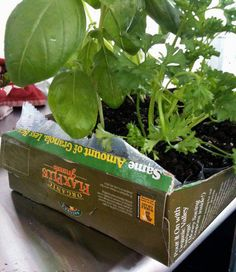 upcycle empty cereal box into starter garden