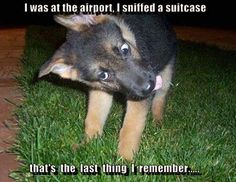 I was at the airport, I sniffed a suitcase and that's the last thing I remember.