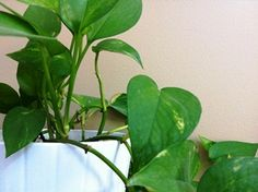 5 Easy Care Houseplants For Your Chronic Pain Toolkit Http Www