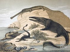 """Coloured lithograph of Plesiosaur and ichthyosaur, a contemporary continental version of the wall chart by Benjamin Waterhouse Hawkins entitled """"Waterhouse Hawkins Diagrams of the Extinct Animals"""". He produced six for the Department of Science and Art. Dinosaur Posters, Dinosaur Art, Prehistoric World, Prehistoric Creatures, Reptiles, Fine Art Prints, Canvas Prints, Extinct Animals, Science Photos"""