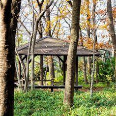 お散歩です  #公園#park #落ち葉#葉っぱ#紅葉#reeves #植物#plants #風景#自然#景色#picture#landscape#nature #反射#reflection #東京#日本#tokyo#japan#love#loves_nippon #写真好きな人と繋がりたい