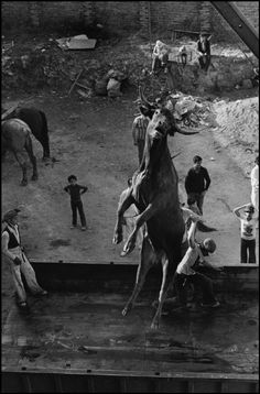 Cristina Garcia Rodero SPAIN. Soria. 1977. The Bull