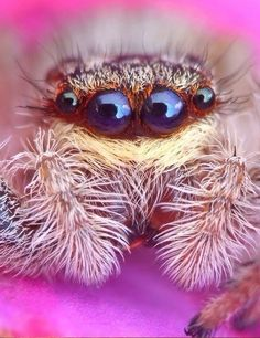Spiders can be scary for some people, but actually, some spiders are just so beautiful and incredible! Without any doubts, jumping spiders Animals And Pets, Funny Animals, Cute Animals, Scary, Creepy, Itsy Bitsy Spider, Jumping Spider, Beautiful Bugs, Bugs And Insects