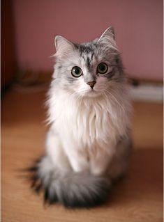 I love the proper tail curl..