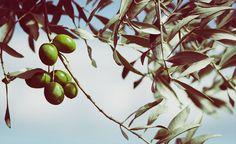 Este fin de semana se ha celebrado la cata de la 17ª edición del concurso Ecotrama, el premio internacional de aceites de oliva virgen extra ecológicos más antiguo de España, y que ha tenido como escenario la ciudad de Baena (Córdoba). El objetivo primordial del este concurso es la promoción de los aceites y las almazaras ganadoras.