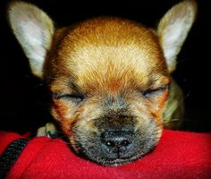 #Dogs #sleeping