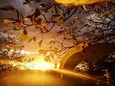 Möllmann Eszter Aranyba borult november  Aranyló november, Hozz békességet, Advent előtt szép reménységet.  Hulljon a falevél, Múljon a bánat, Szívünkbe a szeretet Hozzon új társat.  Tekintsünk előre, Mintha nem lenne tegnap, Aranyba borult november, Köszönöm, hogy itt vagy. Több kép Esztertől: https://www.instagram.com/mollmanneszti/