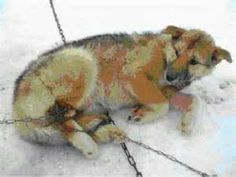 Ways to Fight Animal Cruelty - Bing Images