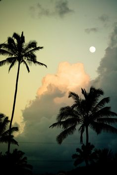 Summer Time >> Moon in paradise.