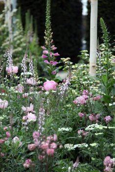 The Chelsea Flower Show Pink Garden, Dream Garden, Beautiful Gardens, Beautiful Flowers, Garden Plants, Shade Garden, Garden Images, Chelsea Flower Show, Garden Borders