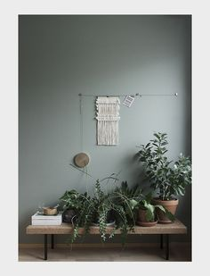 "gardeninglovers: ""plants on bench against green wall """