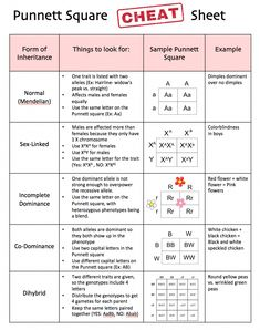 biology lessons Punnett Square Cheat Sheet by Science Lessons That Rock Study Biology, Biology Lessons, Teaching Biology, Science Biology, Life Science, Biology Teacher, Forensic Science, Computer Science, A Level Biology