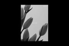 """다음 @Behance 프로젝트 확인: """"Bianca Flora"""" https://www.behance.net/gallery/56679201/Bianca-Flora"""