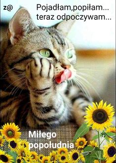 Good Morning Funny, Morning Humor, Ok Boomer, Cards, Animals, Happy Wednesday, Kitty, Pictures, Polish Sayings