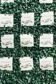 Escort cards tucked into 8ft green hedge walls!