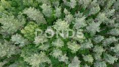 Aerial drone shot over the middle band forest (mixed pine and deciduous). Stock Footage,#middle#band#shot#Aerial