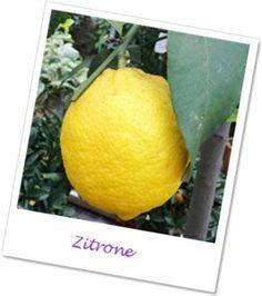 Wirkung ätherisches Zitronenöl