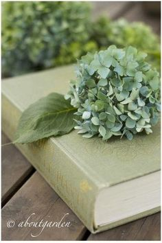 books.quenalbertini: Lovely green hydrangea on beautiful green book | It's a Colorful Life