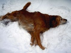 20 Stunning Photos of Dogs Who Love the Snow | WOOFipedia by The American Kennel Club