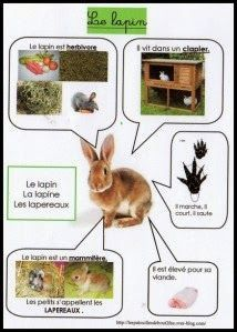 Worksheets For Kids, Activities For Kids, French Worksheets, French Classroom, Nature Study, Animal Projects, Learn French, French Language, Science And Nature