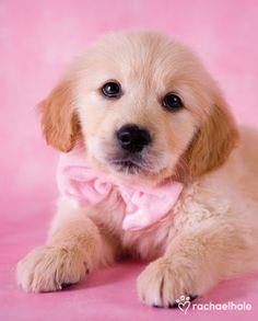 He's got a bowtie :)!