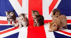 Cats and a flag Cute Animal Photos, Kittens, Cats, Good News, Cute Animals, Around The Worlds, January 14, Flag, Funny Photos