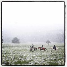 18 de mayo en Gredos a caballo .