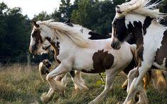 たてがみをなびかせて走る駁毛の馬の写真