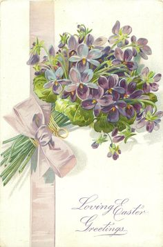 LOVING EASTER GREETINGS bunch of violets, stalks pointing down left, pale lilac ribbon & bow - vintage postcard