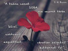 Words Quotes, Life Quotes, Facebook Quotes, Faith Hope Love, English Quotes, Einstein, Motivational Quotes, Encouragement, Wisdom