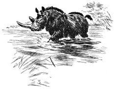 Srsnaty nosorozec. Jedinecna perokresba. Stinovani pomoci hustoty srsti nosorozce je skvele. Pak vykresleni stinu ve vodni hladine.